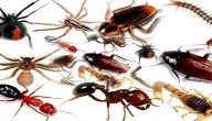 اكثر الحشرات المنزليه انتشارا