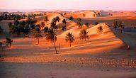 تقاليد صحراء الجزائر