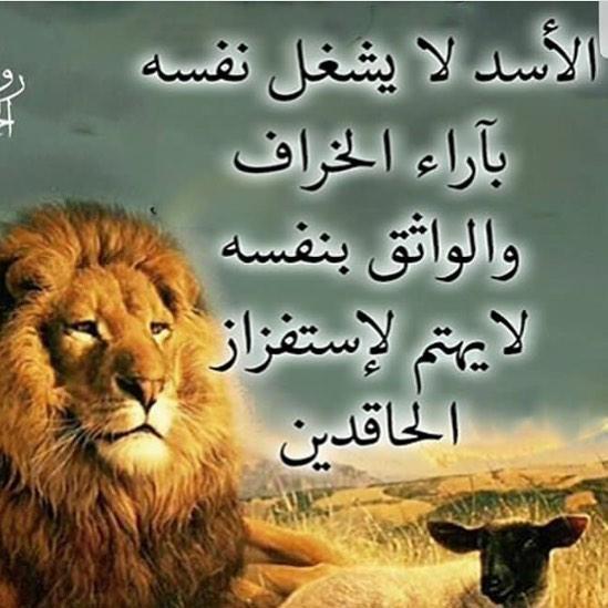 حكم عن شجاعة الأسد