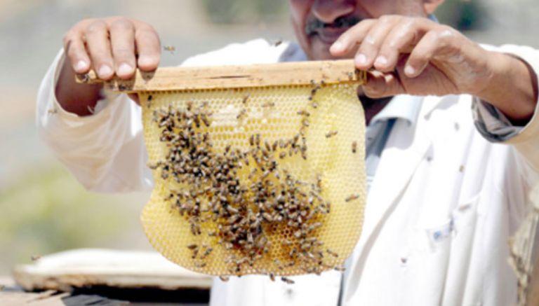 كيفية تربية النحل وانتاج العسل