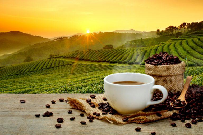 الفرق بين القهوة البرية والهرريه