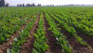 مشاكل الزراعة في العالم العربي