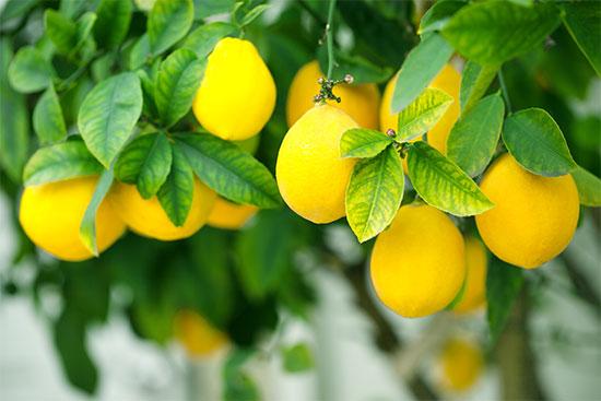 نسبة فيتامين سي في الليمون
