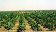 مشاكل الزراعة في السعودية
