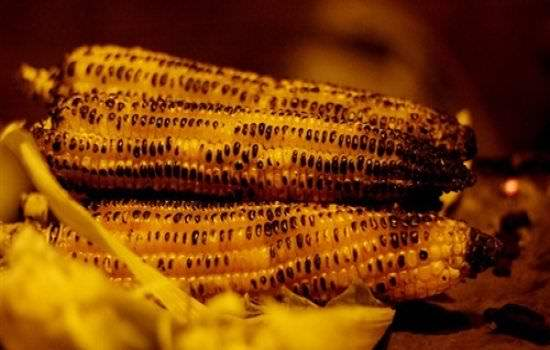 فوائد الذرة المشوية