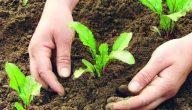 الزراعة في القرآن الكريم