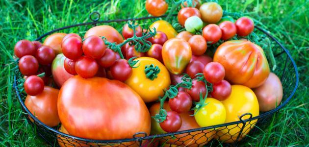 كمية فيتامين سي في الطماطم