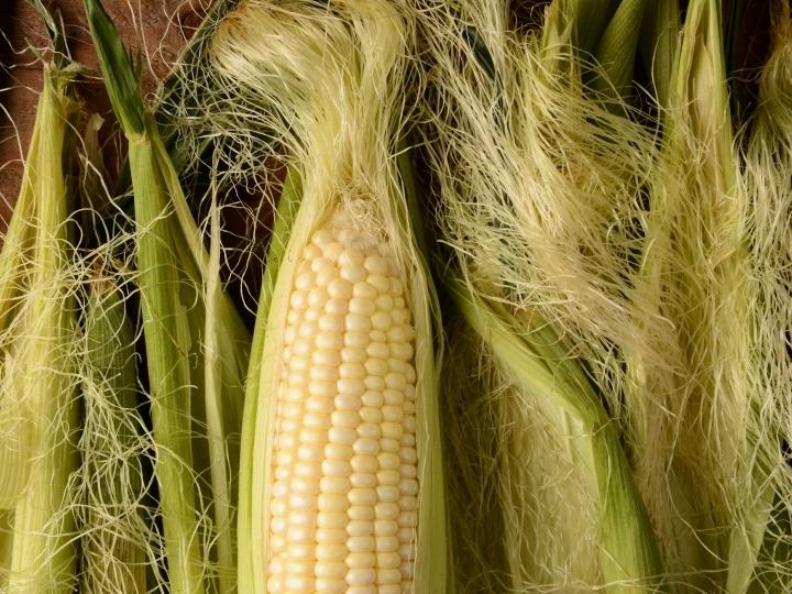 فوائد شعر الذرة للشعر والبشرة