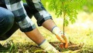 جمله مفيده عن الزراعة
