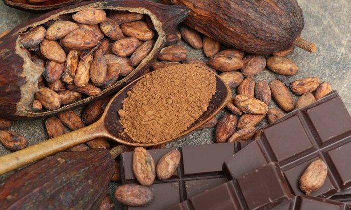 فوائد الكاكاو للشعر الأبيض