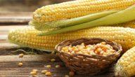 استخدامات الذرة الصفراء