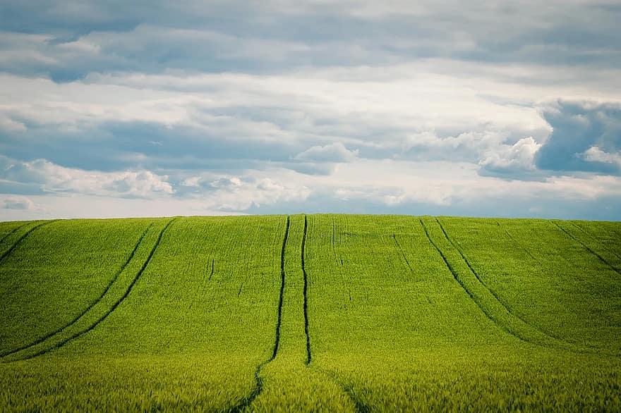 ما هي مشاكل الزراعة