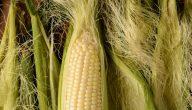 فوائد شعر الذرة