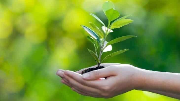 مقدمة قصيره عن البيئة