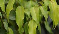 آيات قرآنية عن النباتات