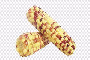 تعرف عن أنواع الذرة بالصور 1a_600x400-300x200