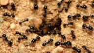 فوائد النمل للتربة