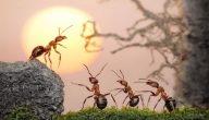 فوائد النمل