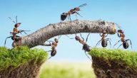 ما فائدة النمل في البيت