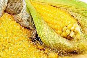 تعرف عن أنواع الذرة بالصور 5h_600x400-300x200