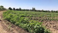 طرق العناية بالارض الزراعية