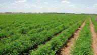 حلول مشاكل الزراعة في الأردن
