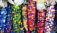 أنواع الذرة بالصور