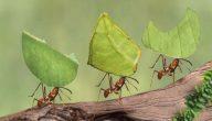 قصة سيدنا سليمان مع النملة