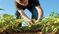 إرشادات زراعية