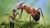 قصة النملة والادارة