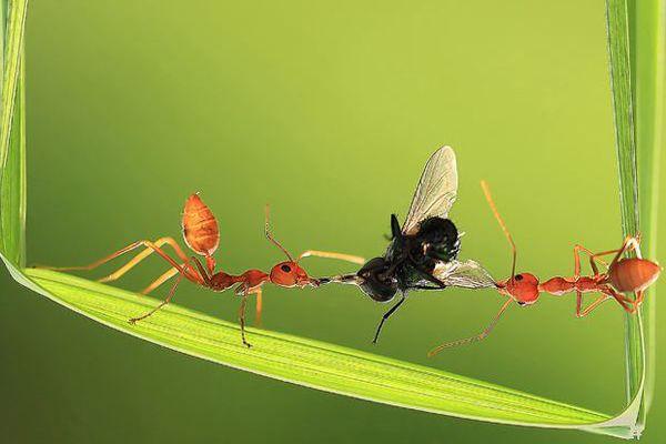 قصة تعاون النمل