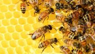 صفات النمل والنحل