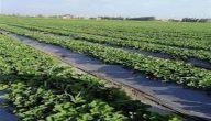 مشاكل الزراعة في الأردن