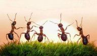 معلومات عن النمل للاطفال