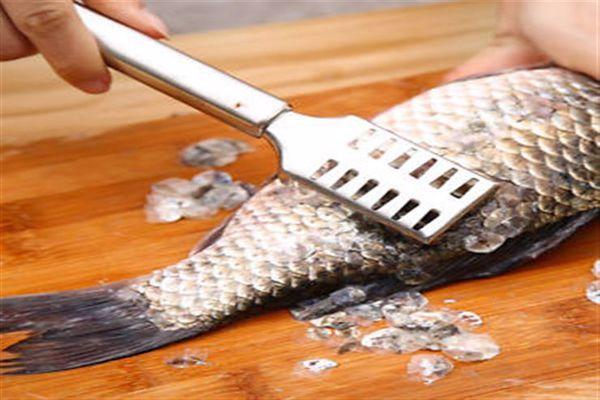 ما فائدة الحراشف للسمكة