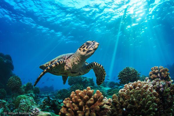 أهمية السلاحف البحرية