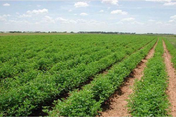 مشاكل الزراعة وحلولها