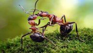 معلومات غريبة عن النمل