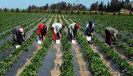 مشاكل الزراعة