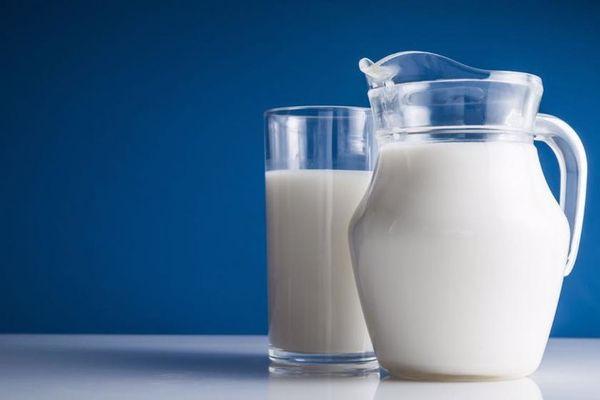 ما هو مصدر الحليب