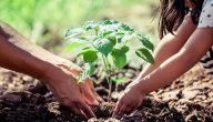 آيات عن الزراعة