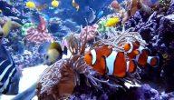 أنواع الأسماك البحرية في مصر بالصور