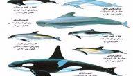 انواع الحيتان بالصور