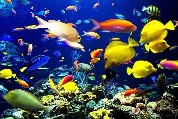 كم يعيش السمك خارج الماء