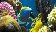 انواع اسماك الزينة بالصور