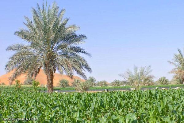 آية أو حديث عن الزراعة