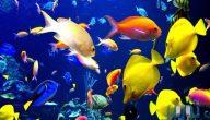 كيف تعيش السمكة في الماء