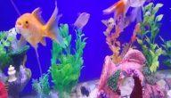 أنواع الأسماك التي تبيض