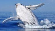 أشرس أنواع الحيتان