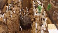 قصة حفر الخندق